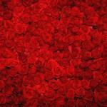 Rosen für deinen Liebesbrief!