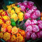 Rosen als Blumenstrauß