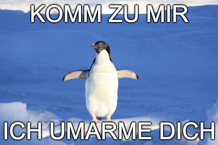umarmen-pinguin-bild